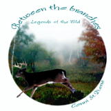 Between the Branches: Legends of the Wild by Conni St.Pierre